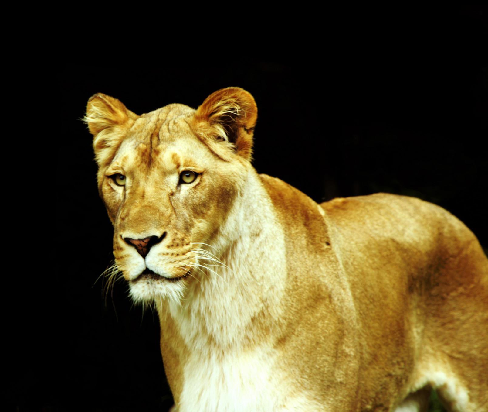 лев женщина